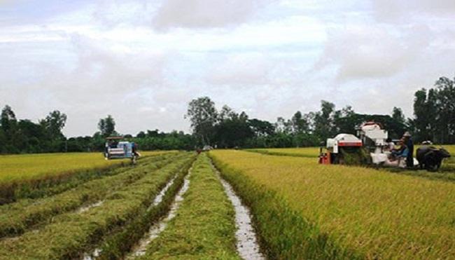 Hai chiến lược nâng tầm gạo Việt