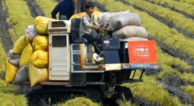 Giấc mơ 900 USD/tấn gạo của Bộ trưởng Phát có dễ thành?