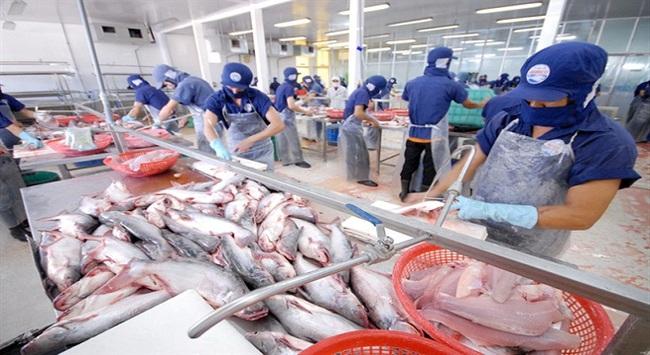 """Nghị định 36: """"Bà đỡ"""" của người nuôi cá tra"""