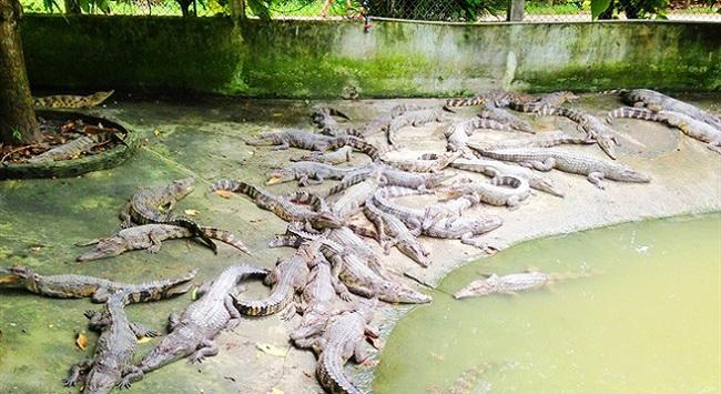 Trăn, cá sấu giảm giá sâu