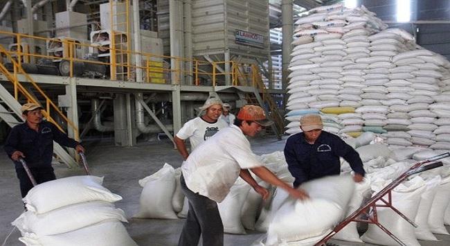 Lập Ban chỉ đạo chương trình trọng điểm nghiên cứu lúa gạo quốc gia