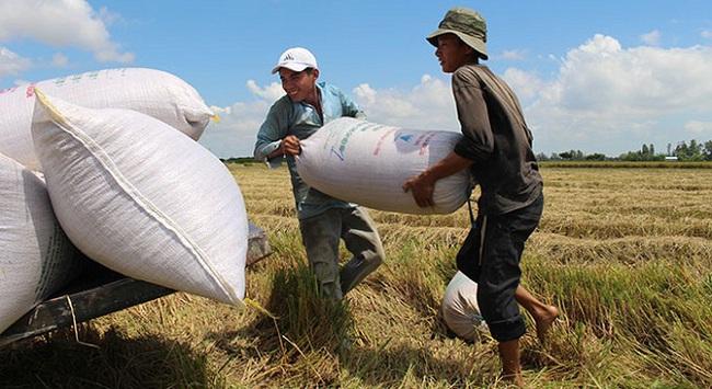 Bấp bênh bán gạo cho Trung Quốc