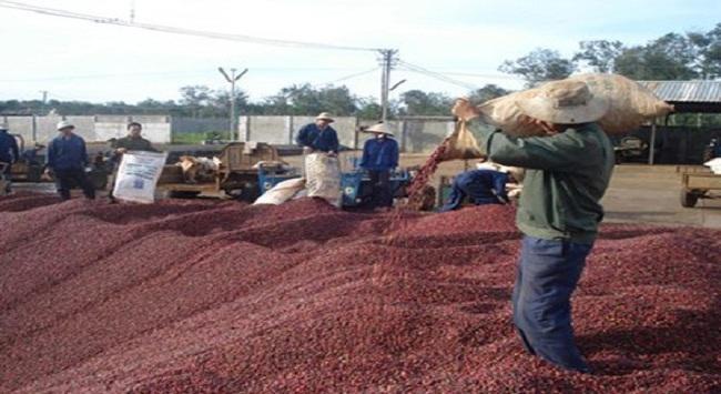 Xuất khẩu cà phê tăng cả sản lượng và giá trị