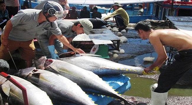 Tổng sản lượng thủy sản 8 tháng đầu năm đạt hơn 4 triệu tấn