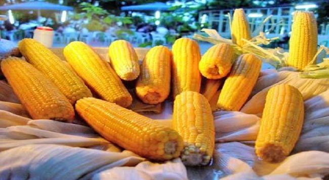 """Việt Nam và cây trồng biến đổi gene: """"Sao phải vội vàng với cây thực phẩm?"""""""