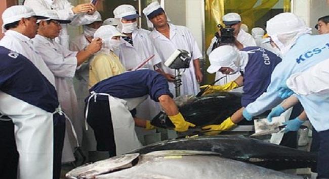 Cứu vãn chất lượng để cá ngừ 'hội nhập'