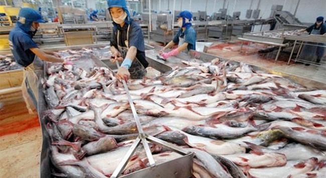 Xuất khẩu cá tra phấn đấu đạt 2,3 tỷ USD