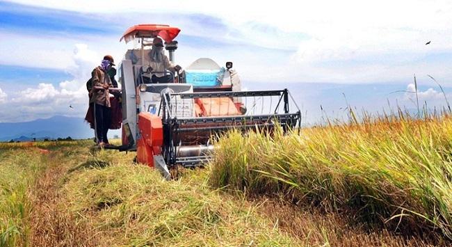 Khuyến cáo nông dân không bán lúa để tránh bị ép giá