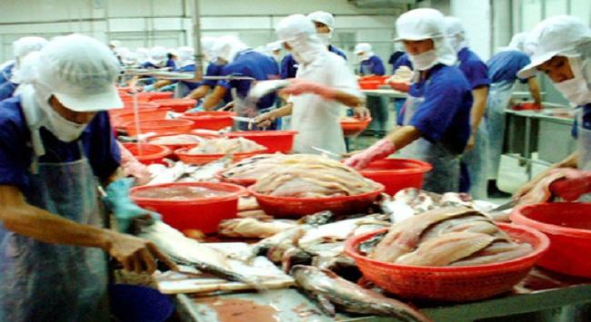 Nhiều doanh nghiệp thao túng thị trường xuất khẩu cá tra sang Nga