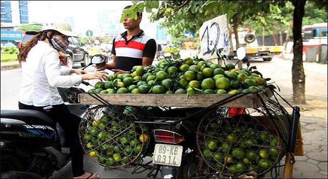 """Cam Trung Quốc """"nhái"""" cam Việt Nam tràn ngập thị trường"""