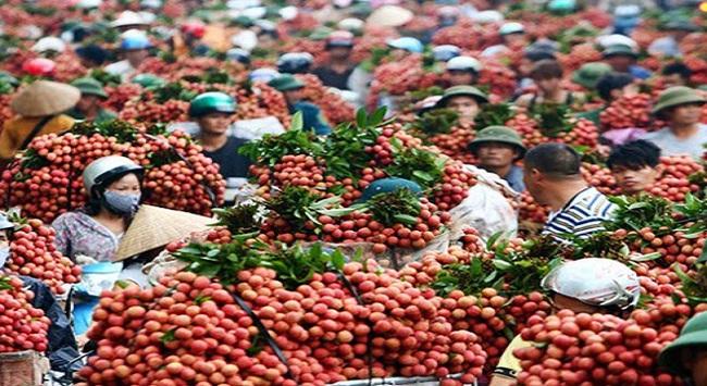 Hỗ trợ để trái vải Việt Nam sớm thâm nhập thị trường Australia