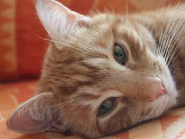 Mèo giành chiến thắng trước các nhà đầu tư tài ba