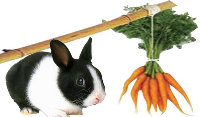 """Chaebol Hàn Quốc - """"cây gậy và củ cà rốt"""""""