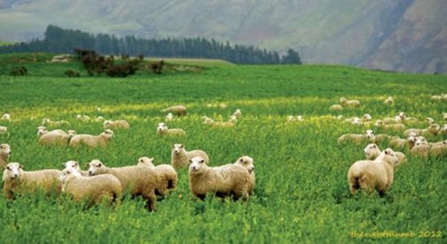 New Zealand yên bình