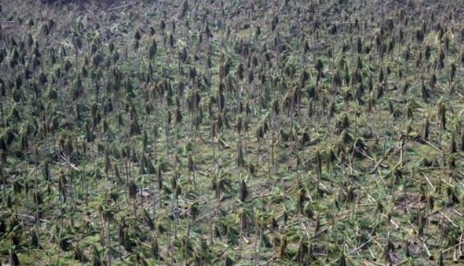 Thiên đường nhiệt đới biến thành địa ngục sau bão Haiyan