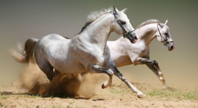 Những chính trị gia tuổi Ngựa nổi tiếng