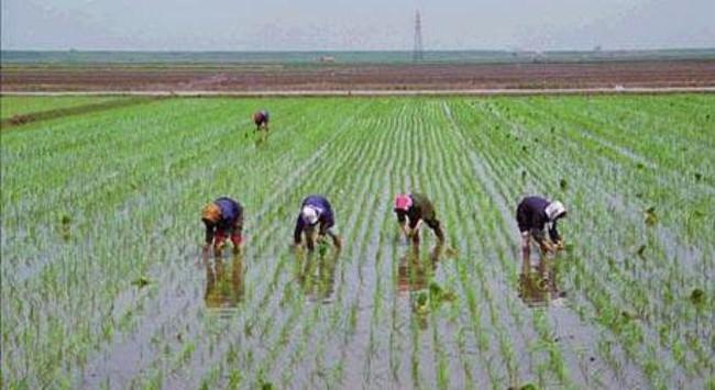 Dân Triều Tiên lại đối mặt nguy cơ thiếu ăn