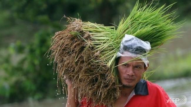 Thái Lan: Đến lượt nông dân biểu tình