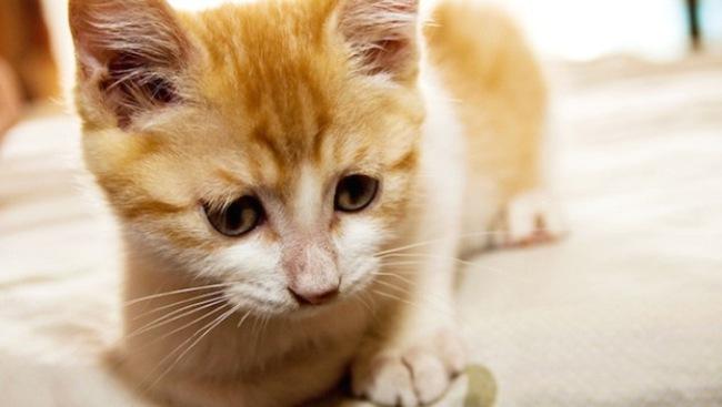 Ngân hàng lớn nhất Nga câu khách bằng ... mèo