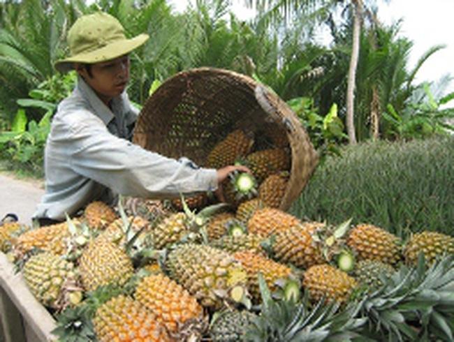 Kiến nghị hỗ trợ nông sản chủ lực