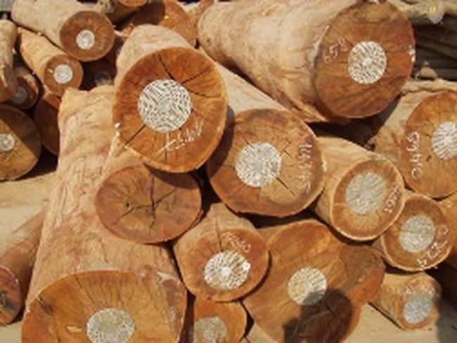 Xuất khẩu gỗ: Bao giờ hết nghịch lý