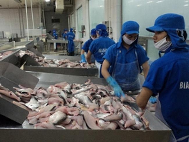 Xuất khẩu cá tra chậm lại, nông dân lỗ