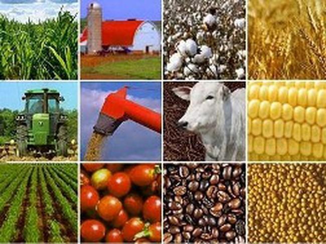Thị trường nông sản ảm đạm