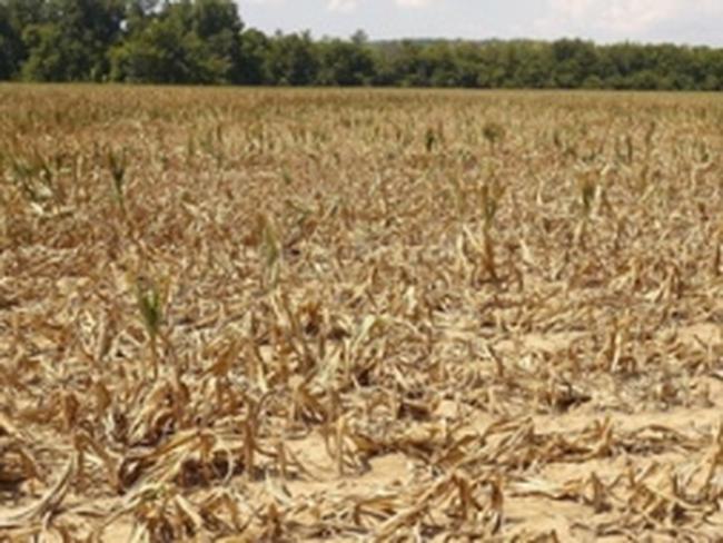 Pháp kêu gọi G20 họp khẩn bàn về giá lương thực