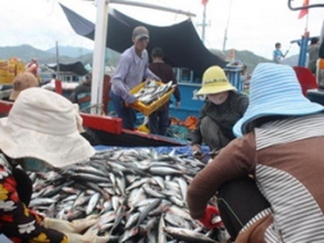 Được mùa cá biển, ngư dân trúng lớn