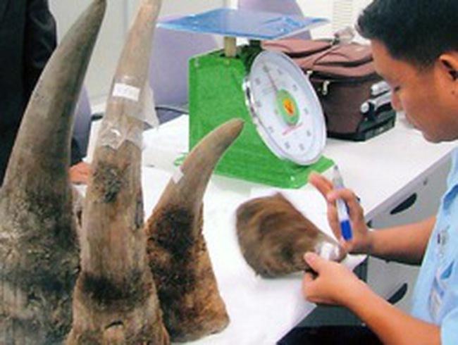 Chiêu lừa mới: Dự án nuôi tê giác lấy sừng