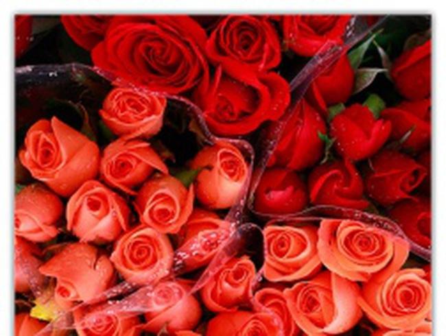 Gần đến 20/10, giá hoa đắt lên từng ngày