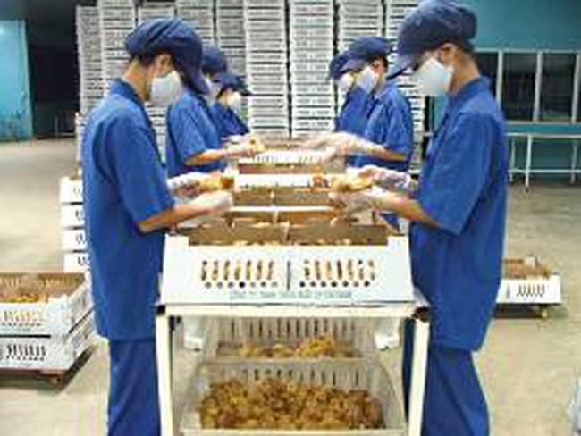 Ba doanh nghiệp lớn đồng loạt giảm 30 – 50% đàn gà thịt