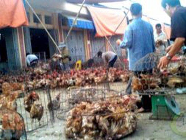 Đề nghị kiện bán phá giá với thịt gà nhập khẩu