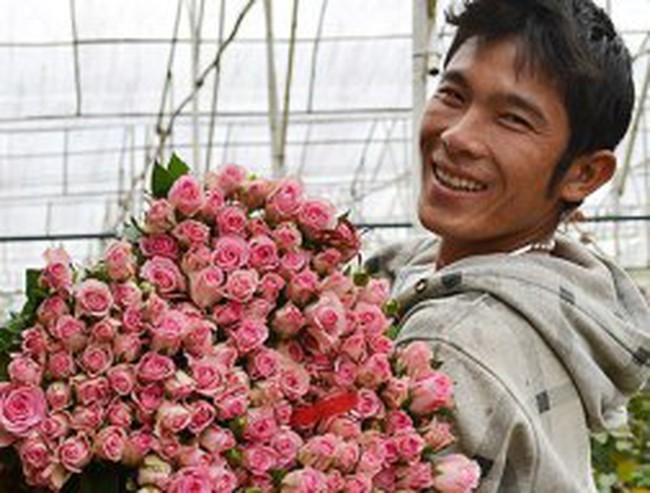 Hoa hồng Đà Lạt tăng giá gấp 3
