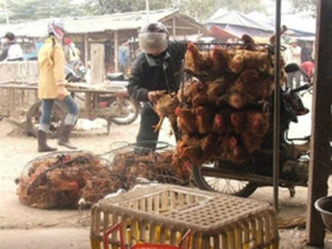 Gà nhập Hàn Quốc là 'gà loại thải' chứ không chỉ là 'gà dai'