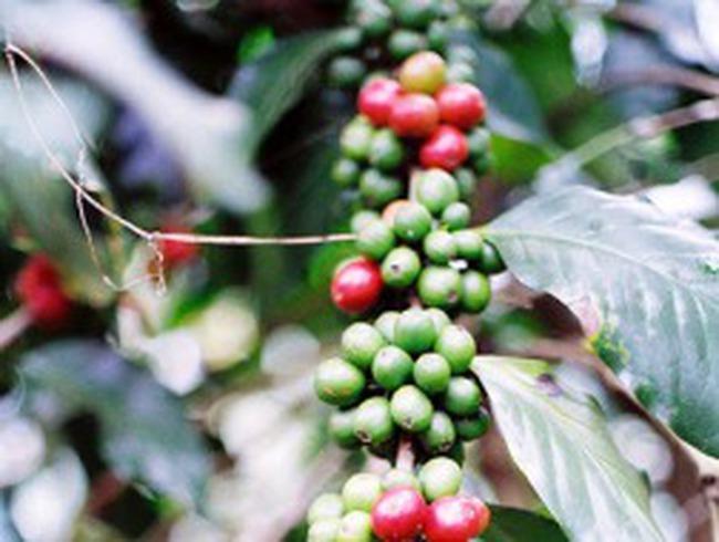 Cà phê Việt Nam hút khách vì giá rẻ
