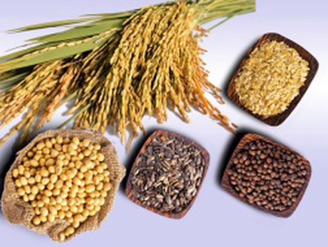 Giá nhiều loai thực phẩm giảm xuống mức thấp nhất 2 năm