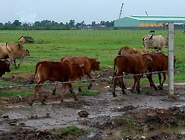 """Thu hồi đất làm KCN """"mọc cỏ"""", nông dân mất việc"""