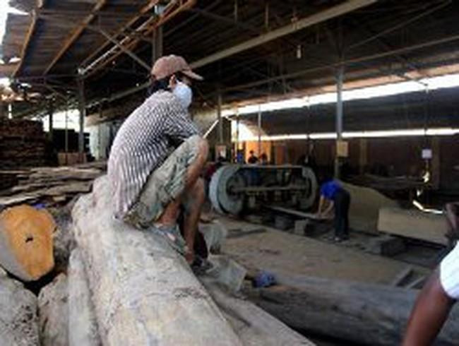 Giá gỗ nguyên liệu sẽ tăng mạnh
