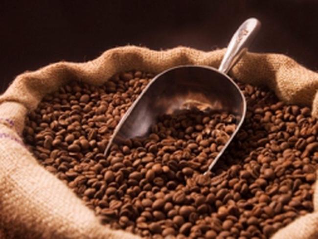 Doanh nghiệp cà phê bỏ trốn, nông dân kêu cứu