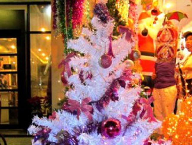 Noel 2012: Thông trắng lên ngôi