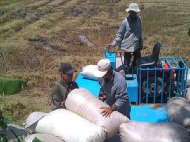 """Nông dân """"kêu"""" vì doanh nghiệp hạ giá xuất khẩu gạo"""