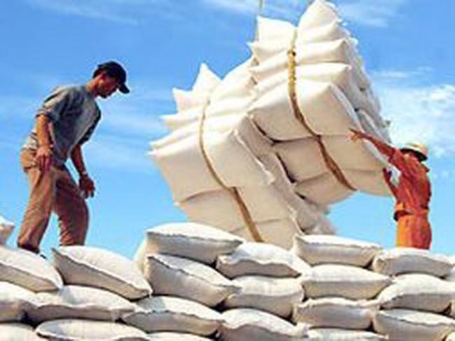 Giá lúa gạo vẫn chịu áp lực giảm