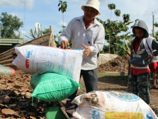 Bình Phước ngăn thu mua lá điều khô