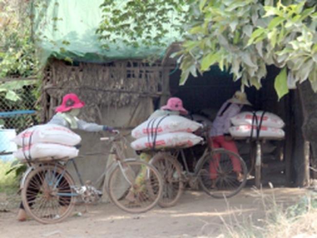 Cả ngàn tấn gạo lậu thoải mái tuồn vào nội địa mỗi ngày