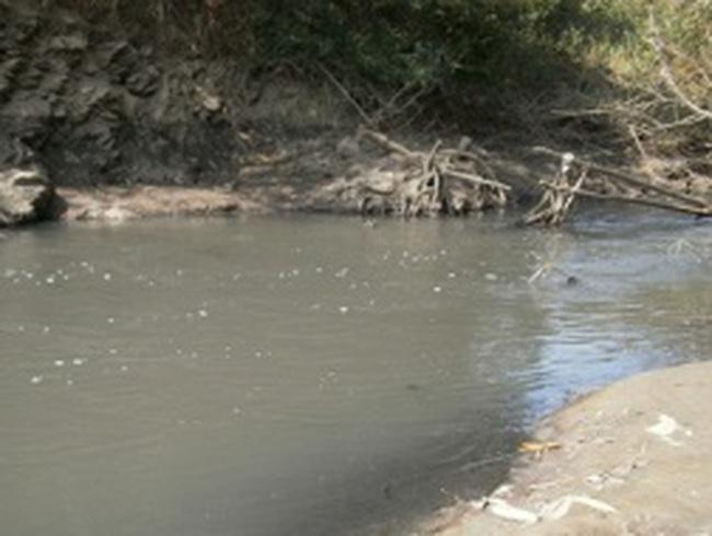 Cá chết nổi kéo dài hàng chục km trên sông Sê-rê-pôk