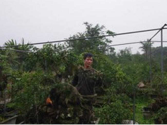 Dân khốn khổ vì trót bỏ lúa trồng cây cảnh