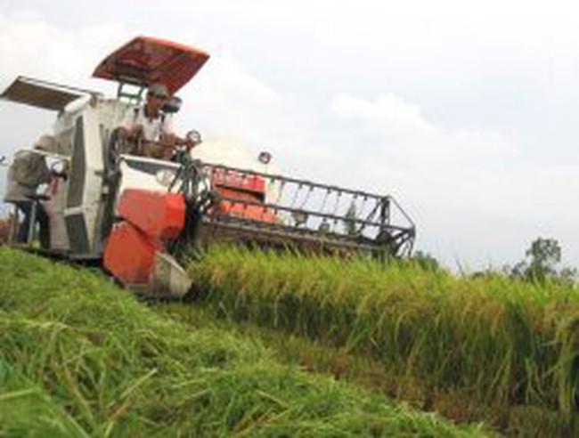 Xuất khẩu nông sản tăng mạnh trong âu lo