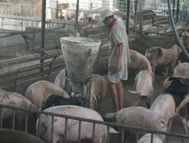 Người chăn nuôi đối mặt với lỗ