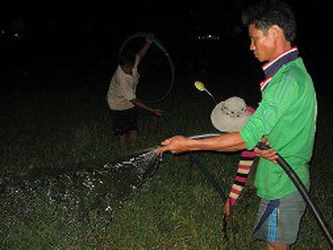 Chưa hết Tết, nông dân Lý Sơn trắng đêm tưới tỏi